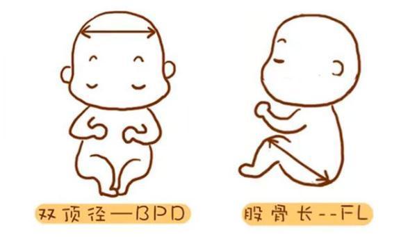 孕產說:懷孕四個月可以從超聲波中看出男女嗎?越早知道越好 - 每日頭條