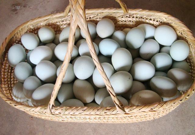 三天染出土雞蛋 淺談各種鳥蛋 - 每日頭條