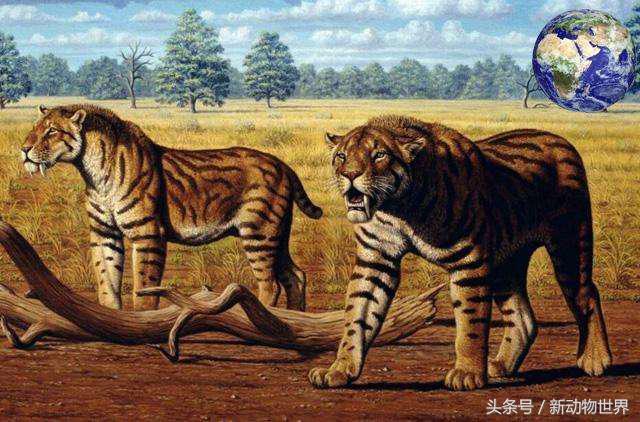 劍齒虎是如何進化出來的?其實中間還有一種老虎作為過渡 - 每日頭條