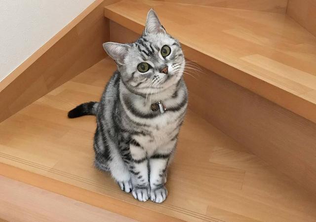 公貓排尿困難?可能是「膀胱結石」在作怪… - 每日頭條