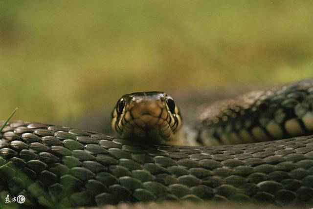 1977年出生:40歲屬蛇人的未來5年。看完誰說不哭! - 每日頭條