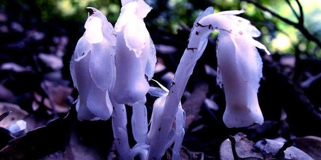 傳說中只生長在冥界的四大「死亡之花」,你或許見過而不自知 - 每日頭條