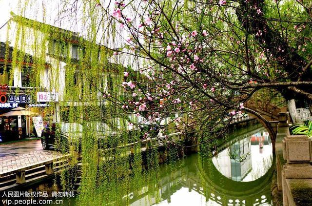 蘇州:春色滿城關不住 桃紅柳綠美如畫 - 每日頭條