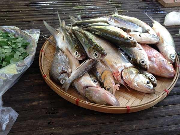 吃魚好處多。但這7種魚絕對不要吃。吃錯可是會傷害身體一輩子! - 每日頭條