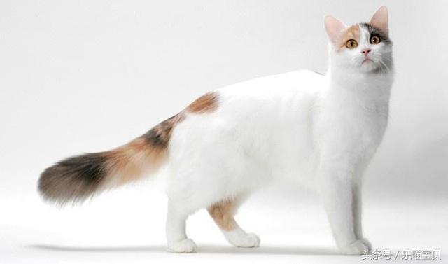 貓咪最討厭讓人觸碰了四個部位。你知道嗎? - 每日頭條