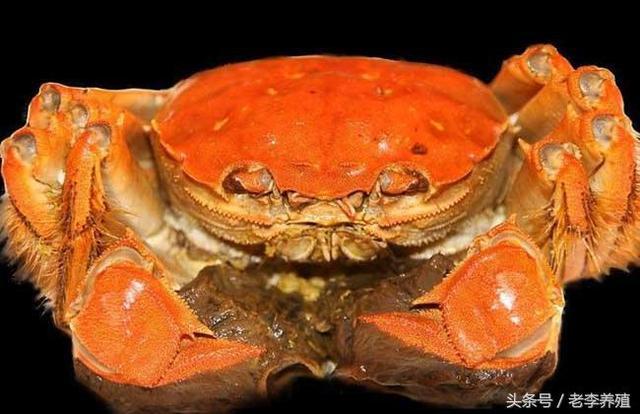 大閘蟹什麼季節吃最好? - 每日頭條