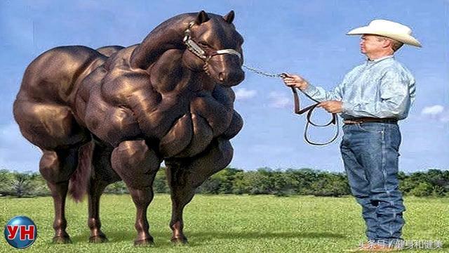 比利時藍牛:動物界的健美冠軍! - 每日頭條