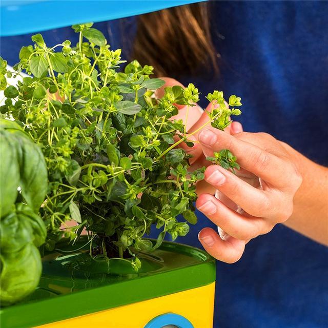 都市農夫怎麼用有機環保的方法防治家庭菜園的蟲蟲 - 每日頭條