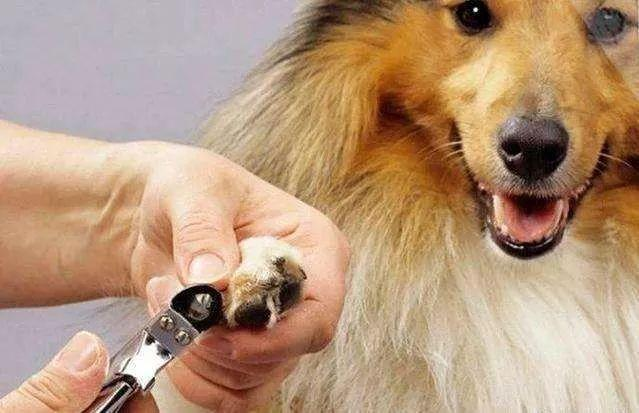 狗狗趾間炎的痛誰懂? - 每日頭條