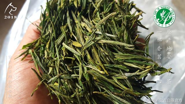 安吉高山野生綠茶怎麼樣又是怎麼來的?安吉哪些地方有野生綠茶 - 每日頭條