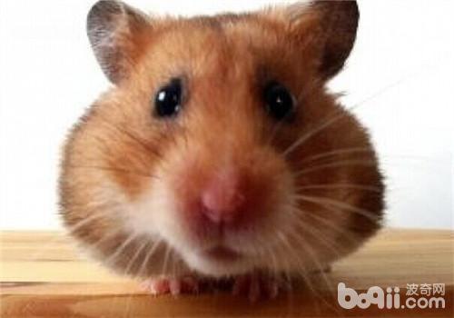 你知道鼠鼠窩裡兇是怎麼回事嗎 - 每日頭條