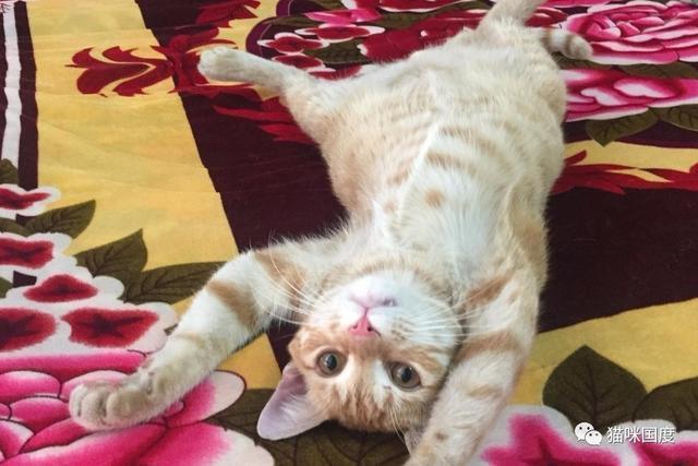 從車底救出的貓咪經歷六個月的調養之後,恍若兩貓 - 每日頭條