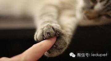 及時治療。讓貓咪與牙齦炎癥說再見 - 每日頭條