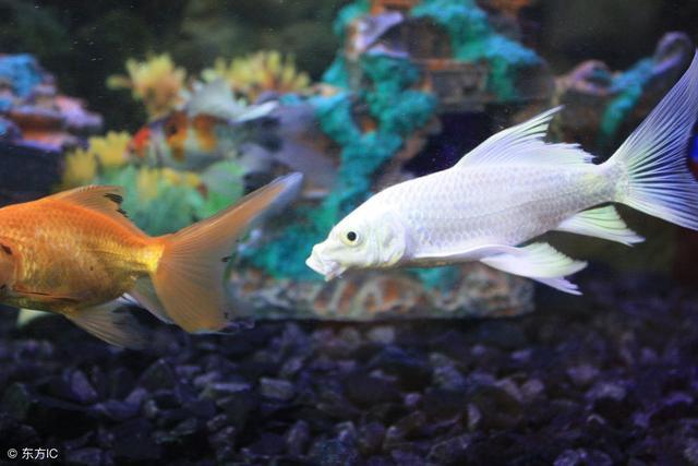 養海水魚與淡水魚有哪些區別? - 每日頭條