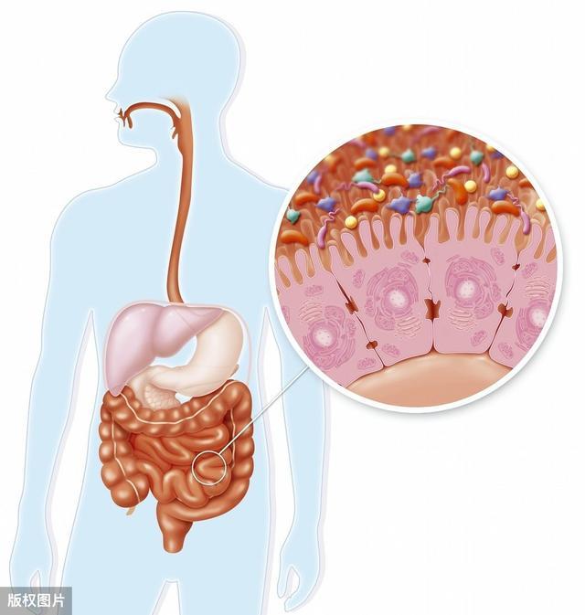 胃病元兇——幽門螺桿菌。常做3事清除。修復胃黏膜。養出健康胃 - 每日頭條