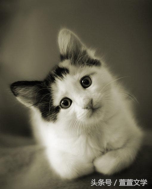 養貓小常識!貓不能吃什麼。你知道嗎?吃這些食物可致命! - 每日頭條