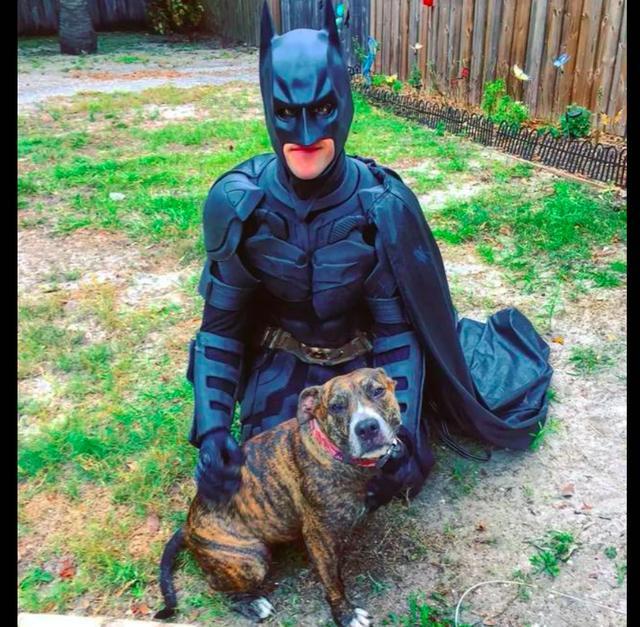 流浪狗要安樂死?「蝙蝠俠」不同意,統統讓它們走向幸福回家路 - 每日頭條