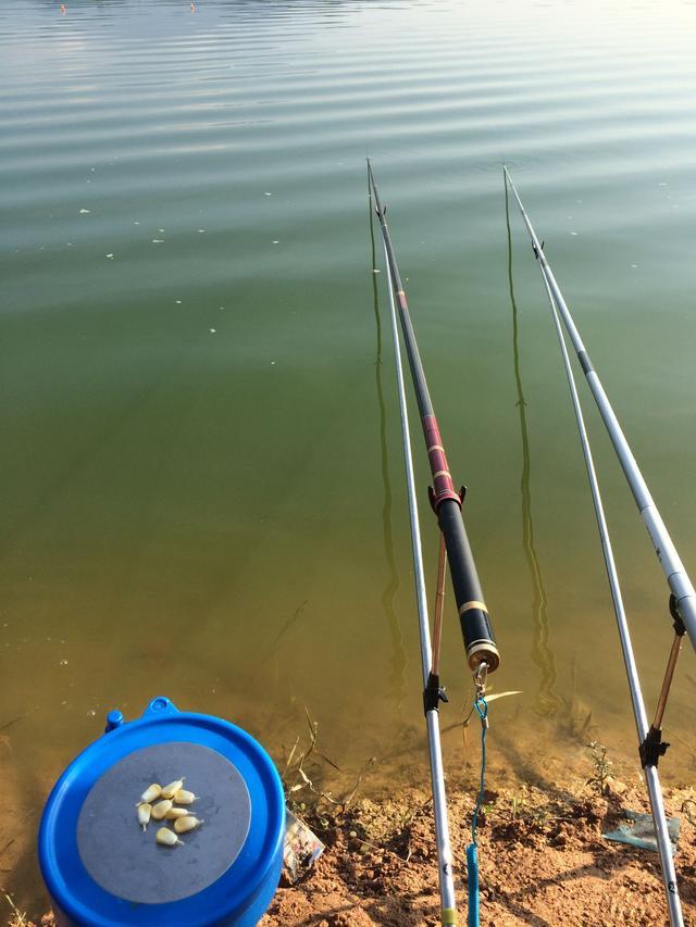 釣魚用玉米這樣掛在魚鉤上。居然魚獲翻了3倍 - 每日頭條