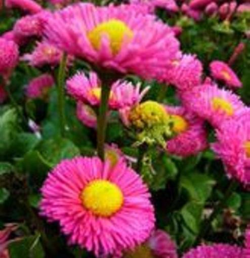 各種種類的菊花,讓你眼花繚亂(二)。 - 每日頭條