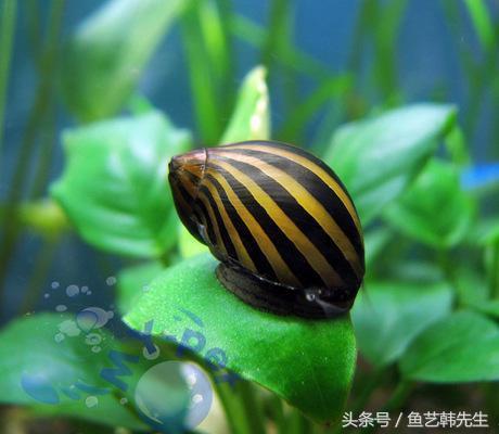 微型魚缸布景怎麼簡而美 - 每日頭條