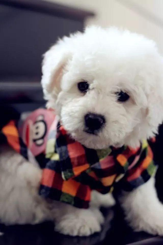 適合新手飼養的「五種」狗狗。堪稱「網紅狗」。你最愛哪種? - 每日頭條
