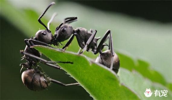 第十二彈:「積蓄哥」螞蟻等待一輩子只為那一刻 - 每日頭條
