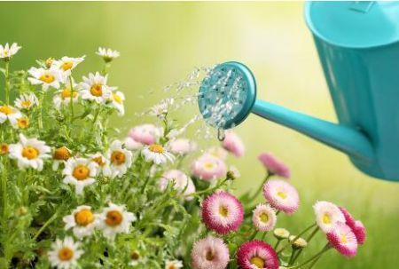 用茶水澆花會產生什麼後果?你肯定想不到 - 每日頭條