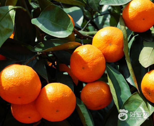 只需一招,酸橘子瞬間就變甜 - 每日頭條