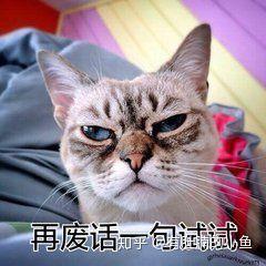 貓咪半夜不睡覺怎麼回事?該怎麼辦呢? - 每日頭條
