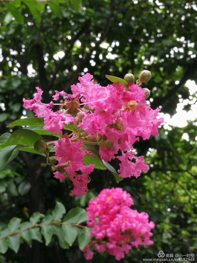 花花世界:紫薇花開「滿堂紅」 - 每日頭條