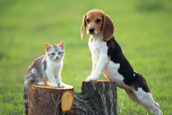 如何挑選適合狗狗的狗糧 - 每日頭條