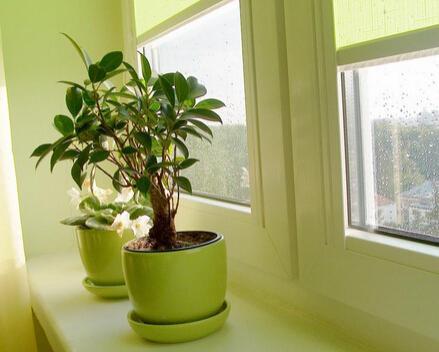 不同空間要擺放不同植物,吸金風水原來這麼容易 - 每日頭條
