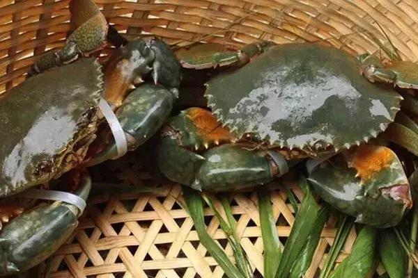 「單身公寓」養青蟹,每公斤440元 - 每日頭條