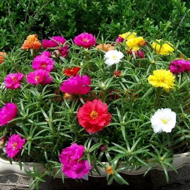 春天播種時間到。你種了哪些美麗的花朵? - 每日頭條