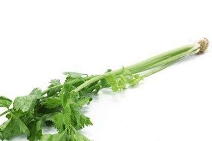 芹菜吃的多。卻不知道芹菜根有這麼多的功效和作用! - 每日頭條