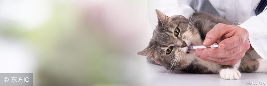 「啊~丘~」貓咪打噴嚏十分文藝,但為了貓咪健康貓友可不能忽視呦 - 每日頭條