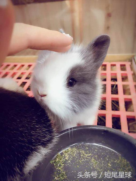 兔子經常咬籠子是怎麼回事?能治嗎? - 每日頭條