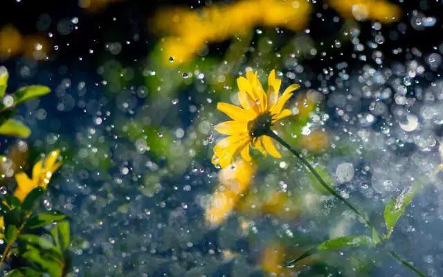 有雨如詩,有詩如雨! - 每日頭條