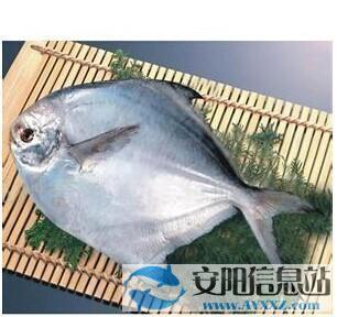鯧魚種類及其營養價值 鯧魚基本信息簡介 - 每日頭條
