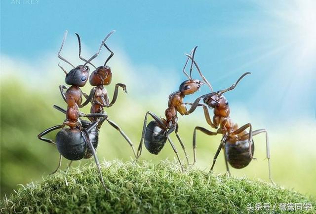 當螞蟻變成人這麼大,還會擁有「神力」嗎? - 每日頭條