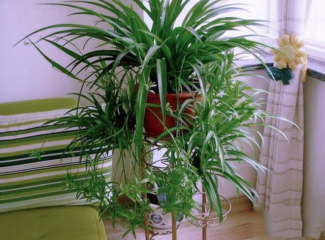 花卉知識:12種適合吊養的常見植物花卉 - 每日頭條
