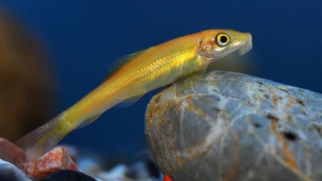 魚缸里最可愛的魚。哪些是你養過的? - 每日頭條