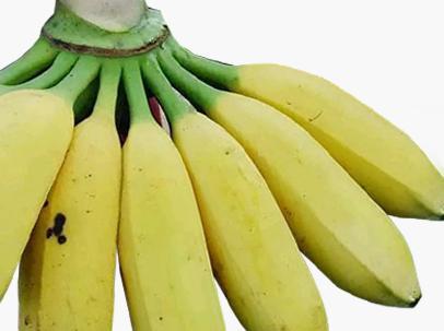 芭蕉的熱量高嗎 一個芭蕉的熱量是多少 - 每日頭條