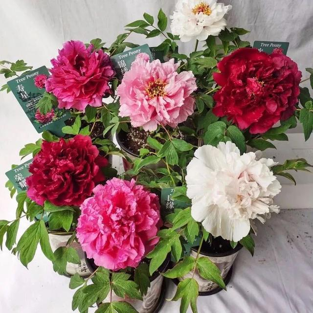 養花人最值得養的十二種花。一種花一種風華。你家養了幾種? - 每日頭條