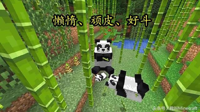 我的世界:新版MC熊貓怎樣馴服?8大特性不負眾望!竹子還會遠麼 - 每日頭條