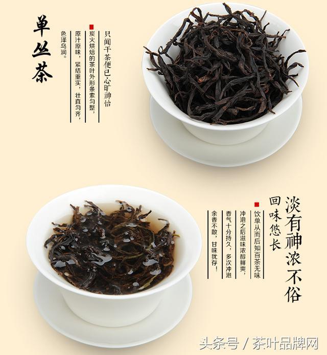 青茶也叫烏龍茶,中國烏龍茶文化歷史與知名烏龍茶! - 每日頭條