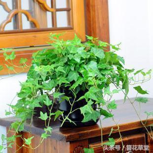 這5種植物自己在家就能繁殖成功。方法特別簡單! - 每日頭條