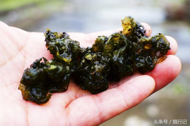 人們稱它為地木耳。又名地皮菜。食用能降脂明目、清熱降火等 - 每日頭條