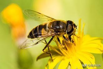 蜜蜂若消失人類只能活4年? - 每日頭條
