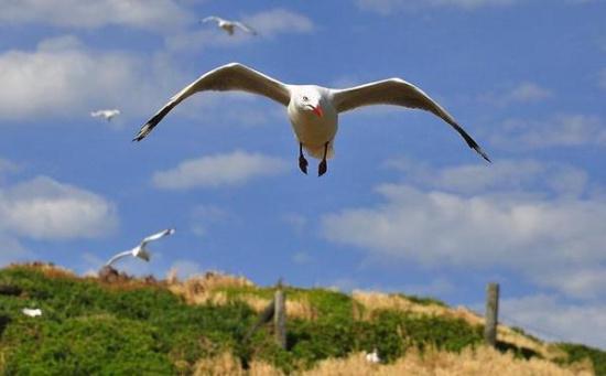 菲利普島的生態樂活之旅 與企鵝為伴! - 每日頭條